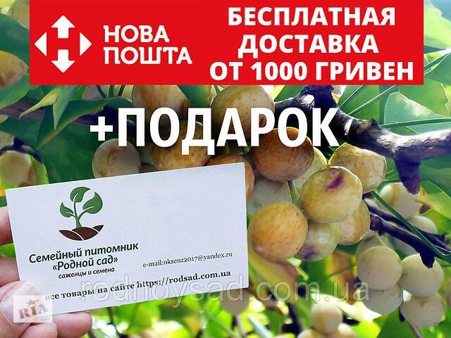 бу Гинкго билоба семена 10 шт (гинко, гинго) для саженцев Ginkgo biloba + инструкции + подарок в Андреевке