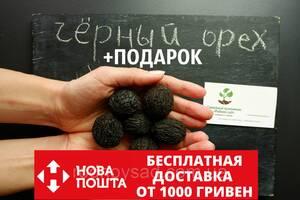 Орех Черный семена (10 штук) Juglans nigra для саженцев, орех черный семена, родственник грецкого