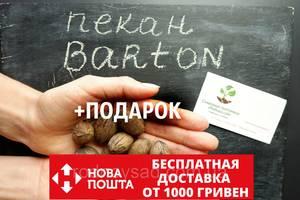 "Пекан (10 штук) сорт ""Barton""(ранний)семена орех кария для саженцев (семян на саженцы) Carya illinoinensis"