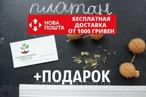 Платан клёнолистный семена (50 шт) для саженцев, чинар насіння + инструкция + подарок