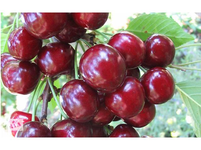 бу Саженцы крупноплодных сортов вишни, черешни и другие плодовые деревья в Запорожье
