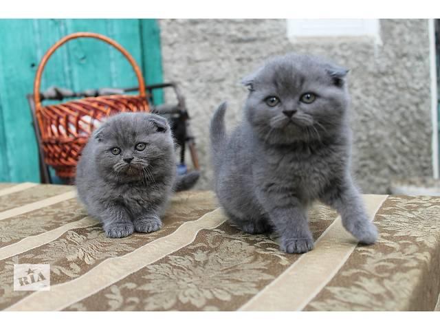 продам Продам чумачедче красивых котят разных окрасов по разным ценам бу в Днепре (Днепропетровск)