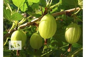 Нові Плодові чагарники