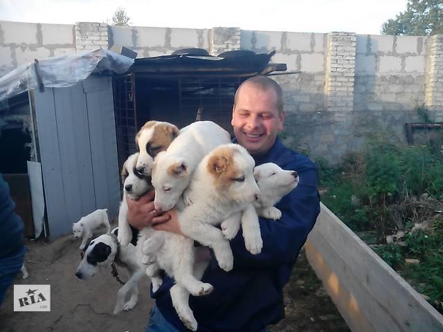 Продам щенят- объявление о продаже  в Новояворовске