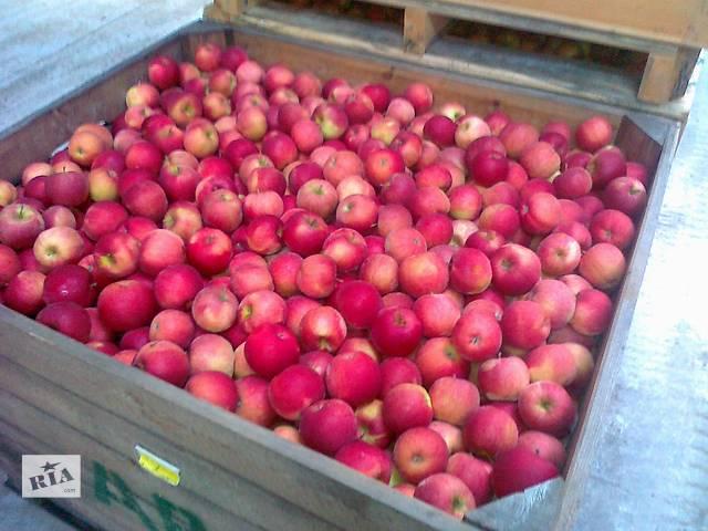 Продам яблоки- объявление о продаже   в Украине