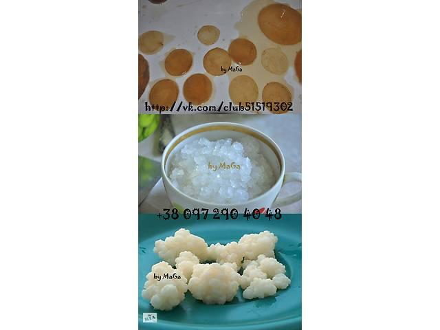 Продам індійський морський, чайний гриб, молочний гриб- объявление о продаже  в Харкові