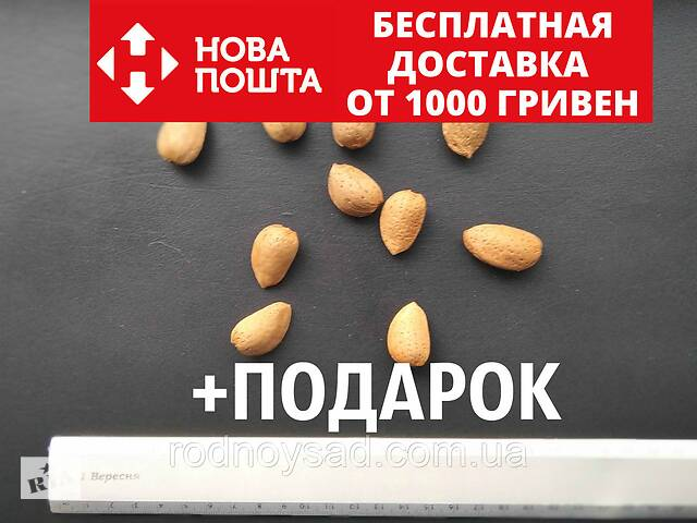 Миндаль сладкий семена (10шт) (насіння мигдаля для саджанців)семечка, косточка для выращивания саженцев- объявление о продаже  в Андреевке