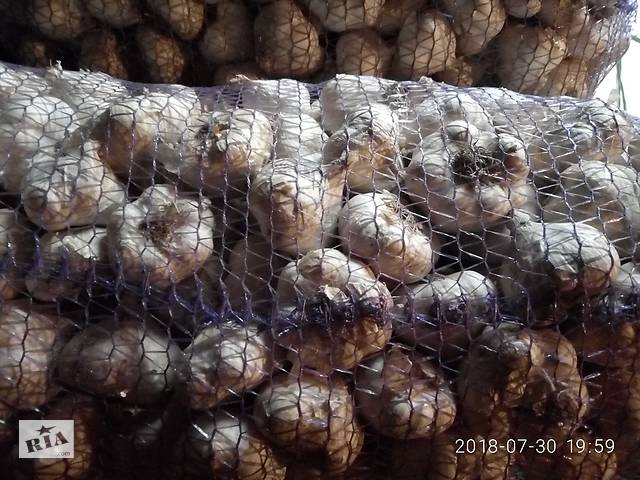 бу посевной материал озимого чеснока в Житомире
