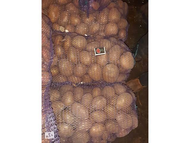 Продам картоплю- объявление о продаже  в Чернигове