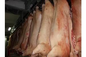 Продам свиные полутуши