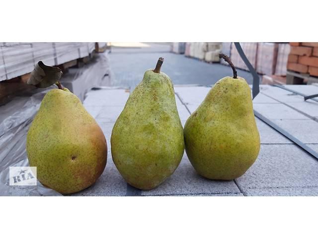 бу Продаж з доставкою якісних яблук в Киеве