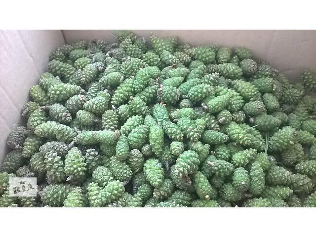 купить бу Шишки зеленые сосновые. в Броварах