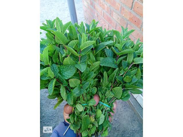 продам свежая зелень бу в Мелитополе