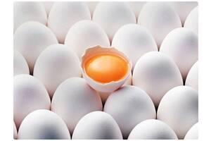 Яйцо куриное, C0, С1, C2, белое и коричневое, экспорт