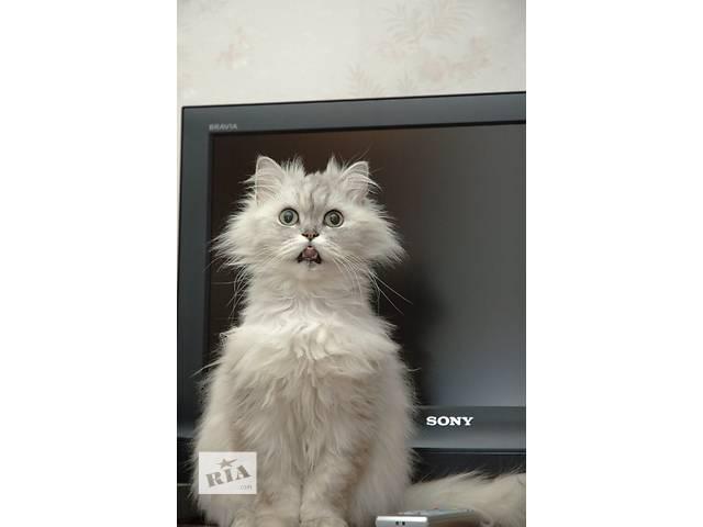 ремонт телевизоров с выездом к клиенту- объявление о продаже  в Бердичеве