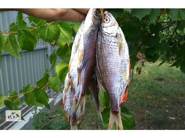 бу Рыба тарань азовская малосольная вкусная! в Бердянске