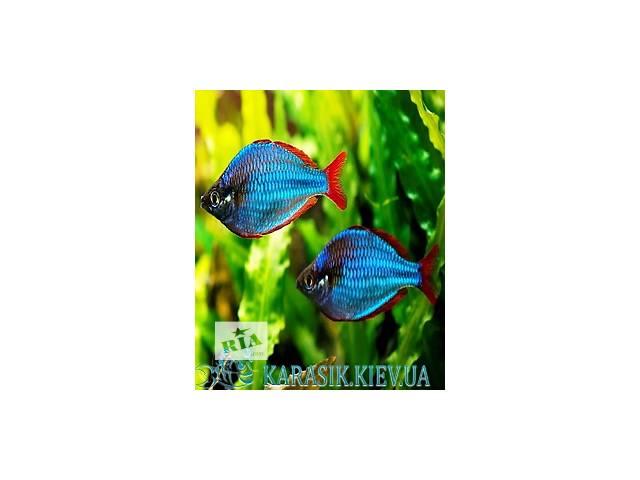 бу Рыбы в аквариум в Киеве