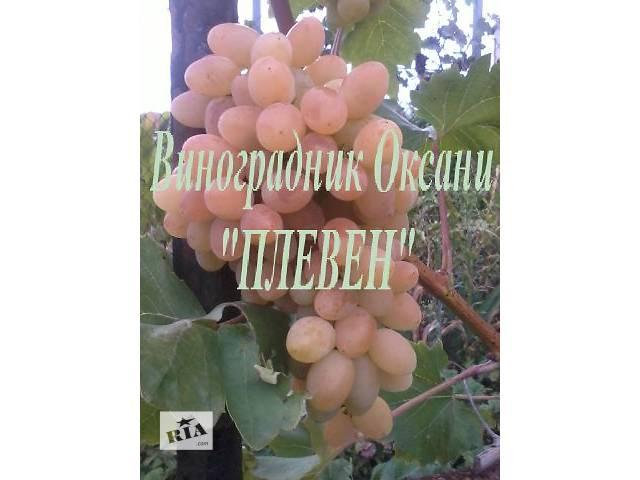 бу Саженцы винограда в Тернополе