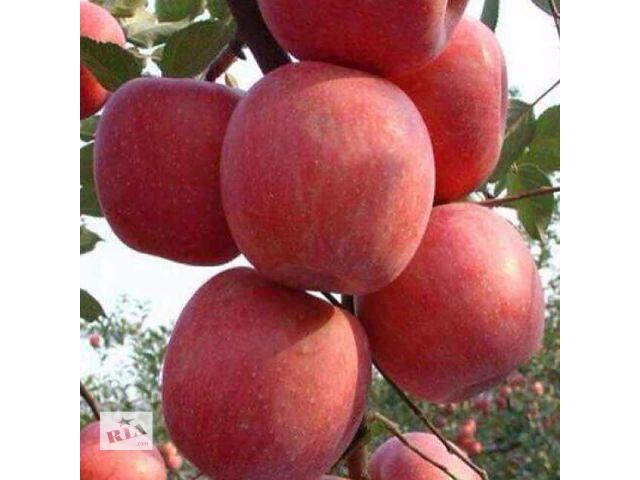 Саженцы плодовых деревьев и ягодных кустарников. Огромный выбор сортов, доставка по Украине.- объявление о продаже  в Сумах