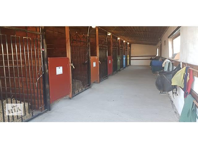 купить бу Аренда стойла для лошадей  в Украине
