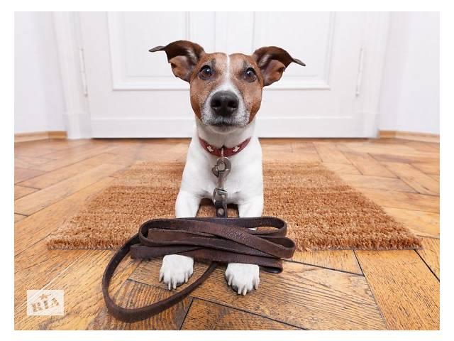 бу Выгуляю вашу собаку в Ровно