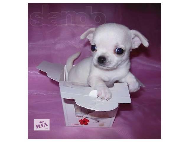 купить бу Собаки, щенки в Киеве