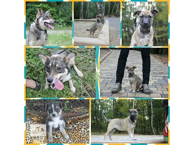 купить бу Собаки в добрі руки в Тернополе