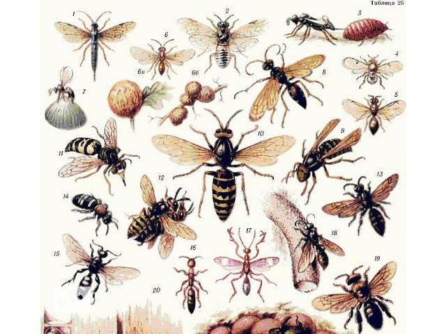 продам Средства от насекомых Средства от комаров Антимоль бу в Киеве