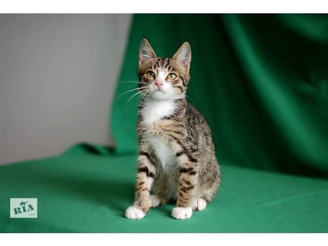 бу Тришка, четырехмесячный котенок окраса табби. в Киеве