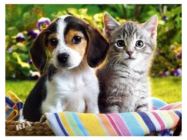 бу Ветеринарная помощь на дому, вызов ветеринара на дом, ветеринарная клиника круглосуточно в Киеве
