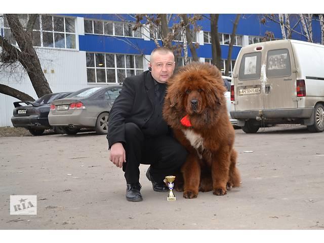бу Воспитание и дрессировка собак. Хендлинг. Физ.подготовка собак. в Донецкой области