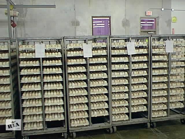 бу Инкубационное яйцо бройлера КОББ-500 в Дружковке
