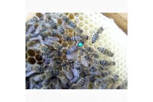 Пчеломатки карника ПЕШЕЦ, ПЕРНЕРА. Украинская Степная.