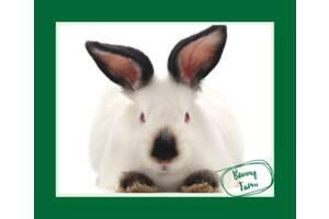 Калифорнийский кролик продажа