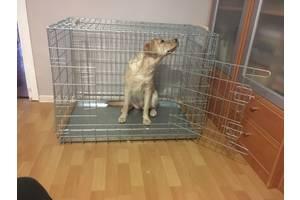 Клетка вольер для собак ВОЛК-1, №5, 92х63х72h см усиленная 5мм