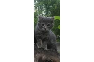 Котенок сибирский