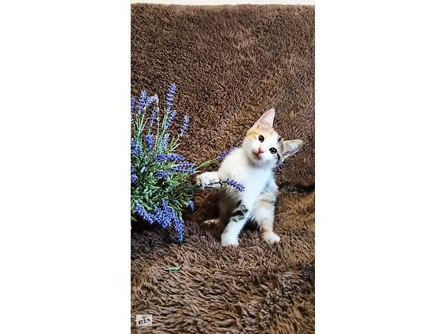 Кошенята на щастя- объявление о продаже  в Киеве