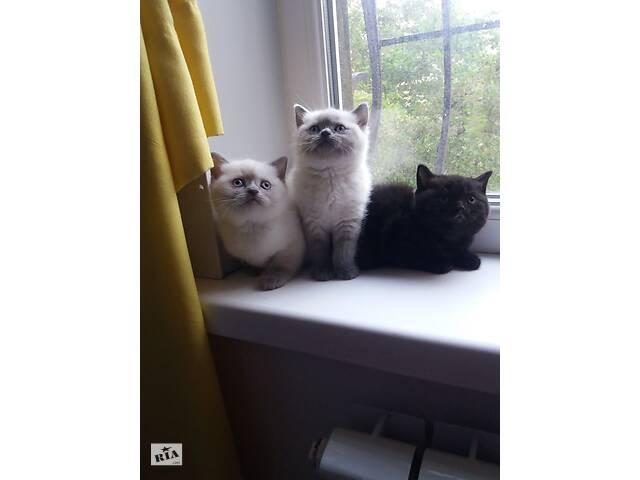 Котята милые