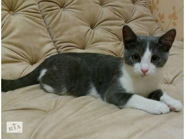 Котята в поисках семьи- объявление о продаже   в Украине