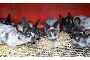Кроленята разных пород
