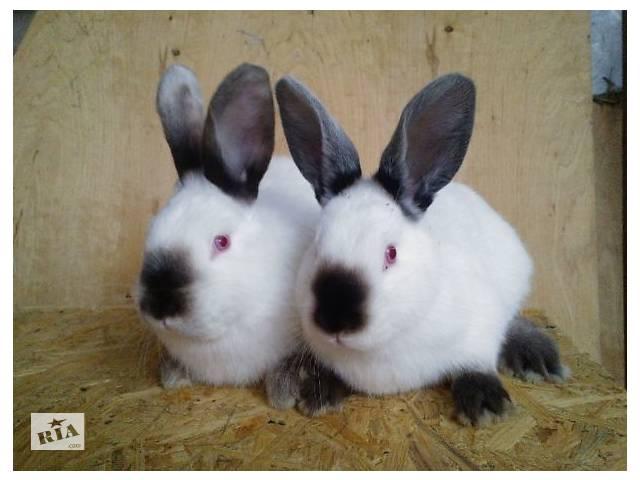 купить бу Кролики Калифорнийские в Покровске (Красноармейск)