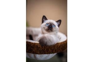 Ласковый и умный котенок
