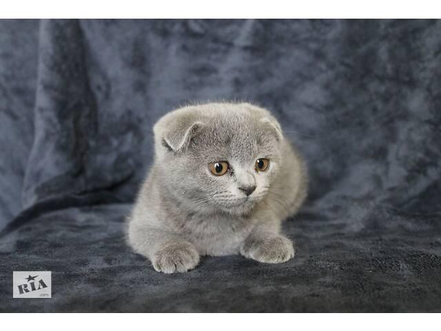 купить бу Милые выслоухие и прямоухие котята в Киеве
