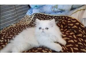 Очень красивый развитый белый мальчик перс