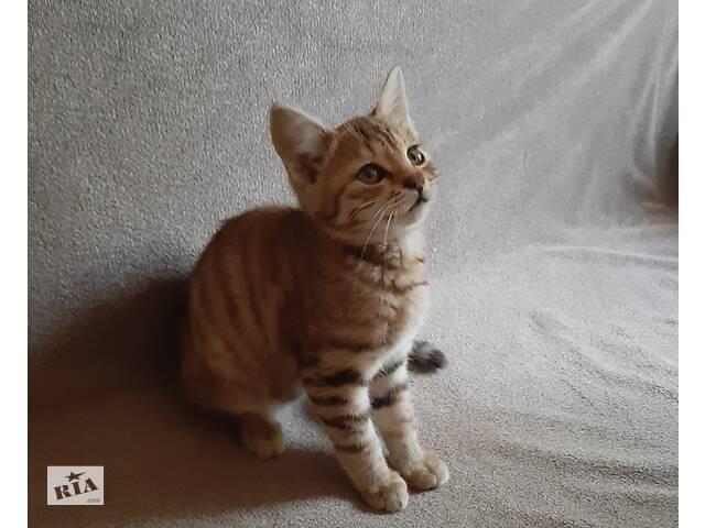 купить бу Отдам котенка в Чернигове