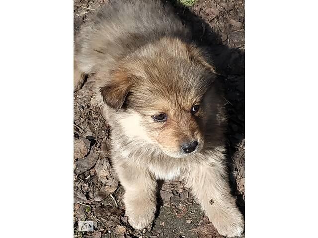 Отдам щенка в хорошие руки- объявление о продаже  в Днепре (Днепропетровск)