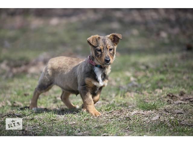 Отдам в хорошие руки щенка подростка, девочку Олимпию, небольшого размера.