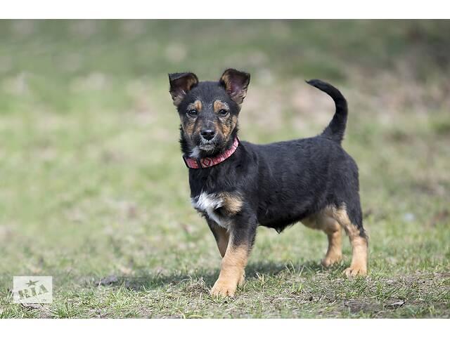 Отдам в хорошие руки щенка подростка, девочку Омегу, небольшого размера.