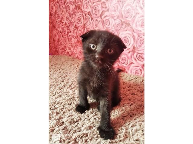 купить бу Продається кошеня в Ровно