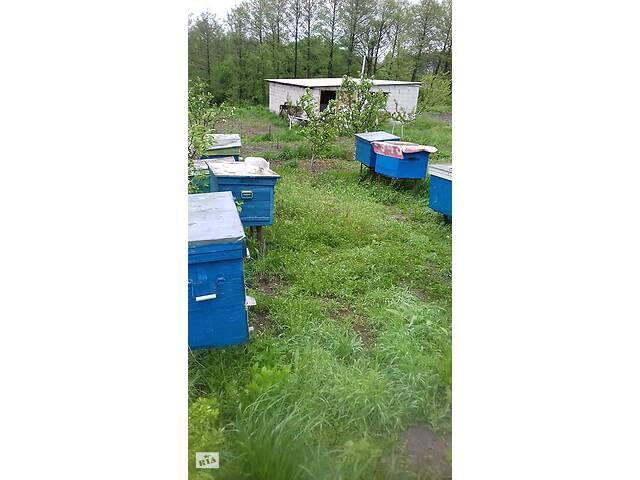 бу Продам бджолосім'ї в Бышеве
